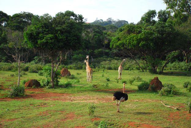 JOURNEY TO UGANDA Photo reportage di viaggio di Susimagin